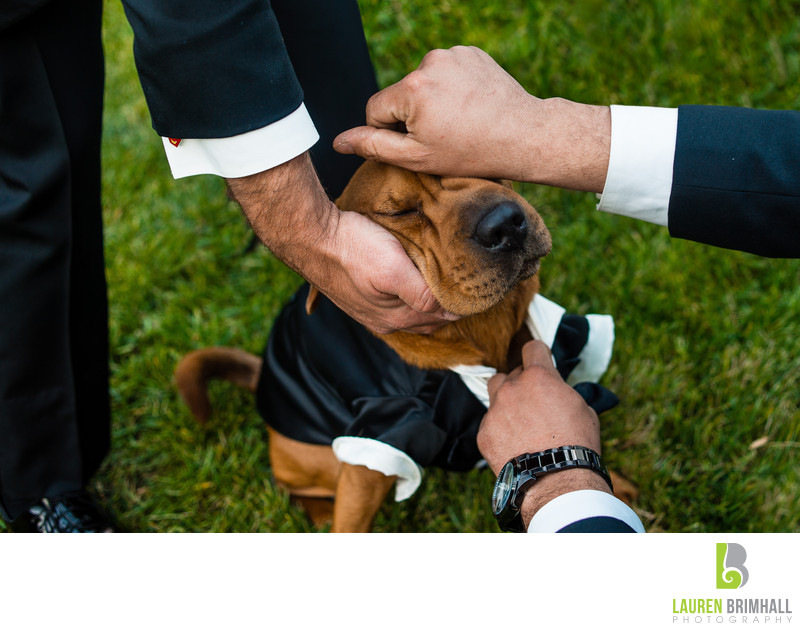 Dog in Tuxedo with groomsmen