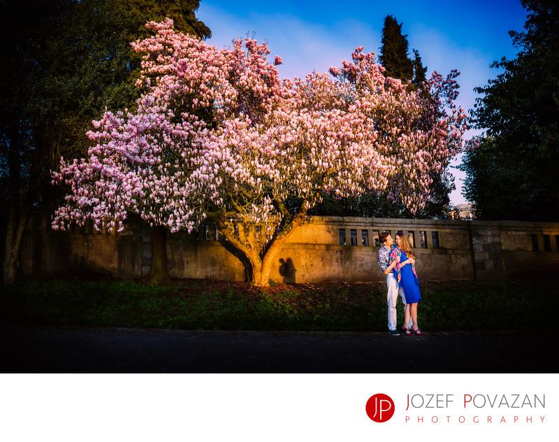 Stanley park cherry blossom romance engagement pictures