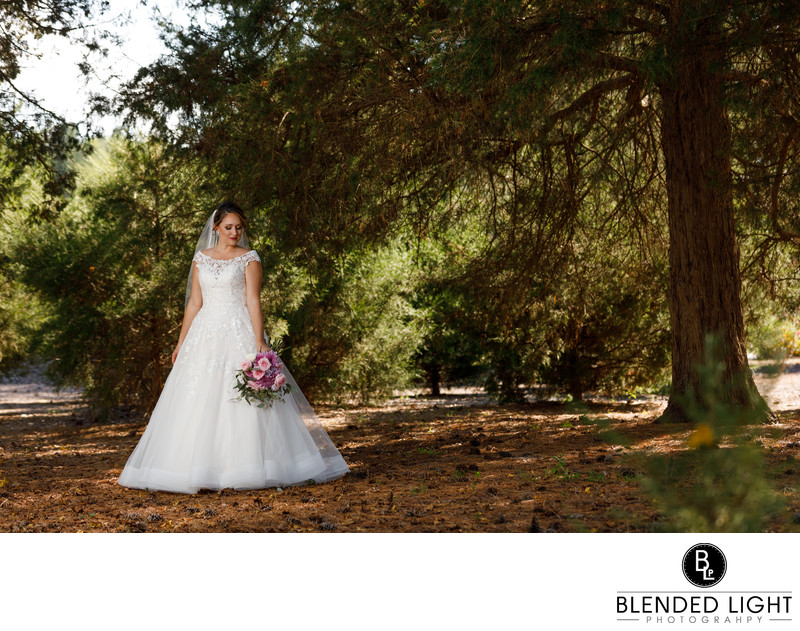 Bridal portrait among the cedar trees in North Carolina