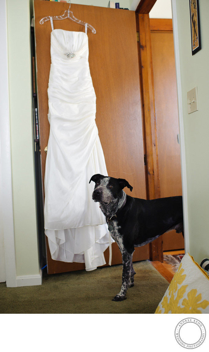 Maine wedding dog photos