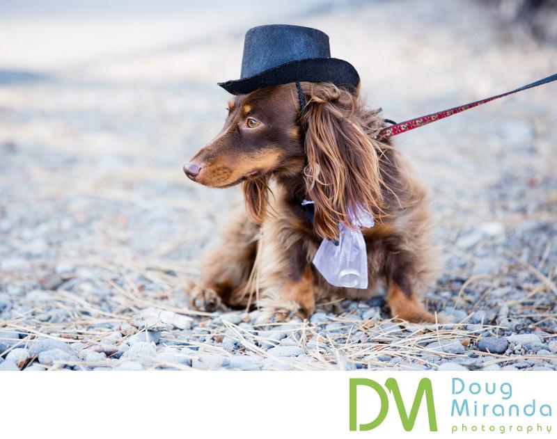 Ring Bearer Dog Photos