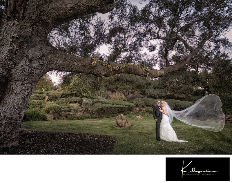 wedding couple under tree with vail blowing