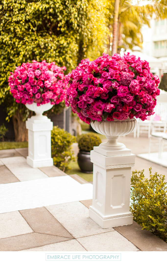 Huge Pots of Fuchsia Roses on Pedestals