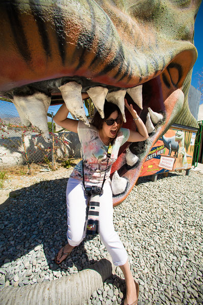 Dino Snacks
