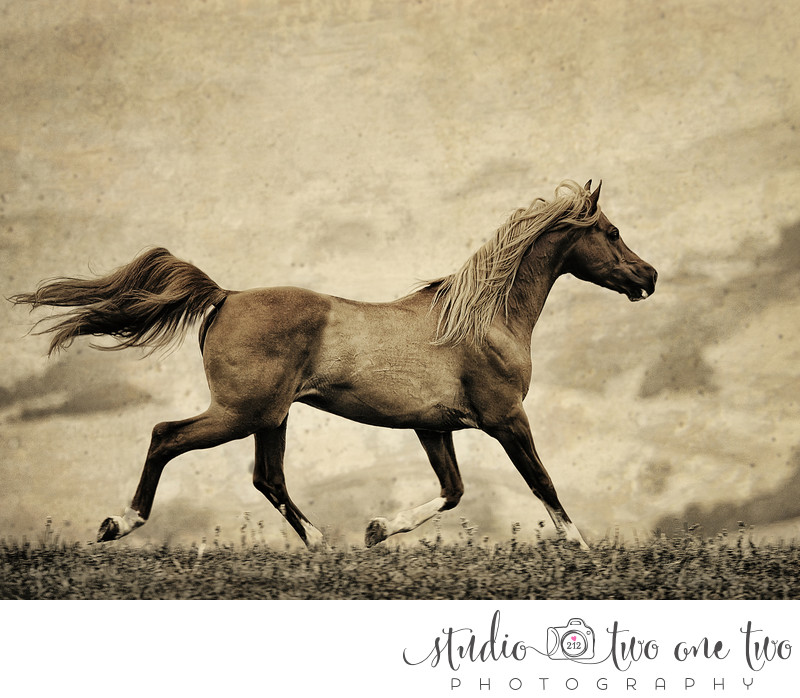 Horse Photography in the Southeast