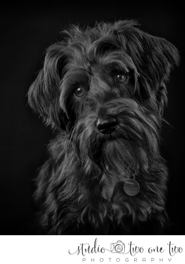 Studio Pet Photography Columbia SC