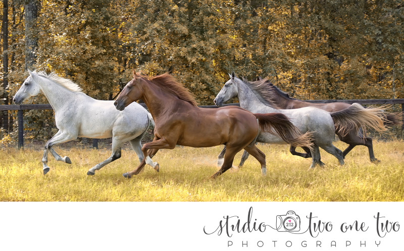 Best equine photographers in Southeast