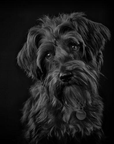Studio Pet Photography Columbia SC