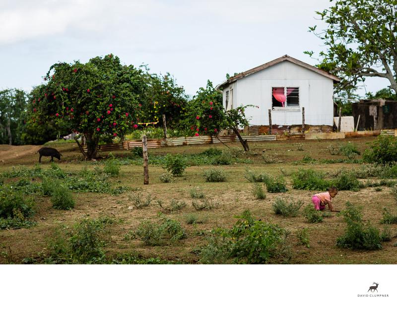 Baby and Pig in Nomuka Island Tonga