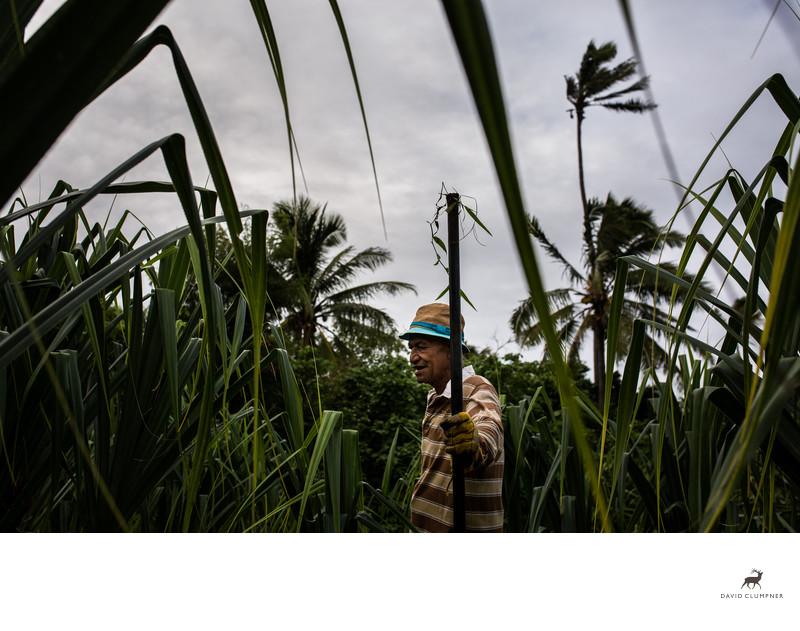 Old Man Farms Pandanus in Tongan Field
