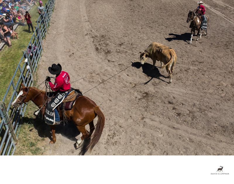 Kesler Rodeo Bull