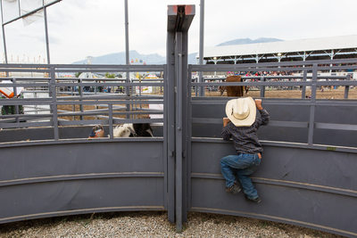 Young Cowboy Climbs Chutes at Montana Rodeo
