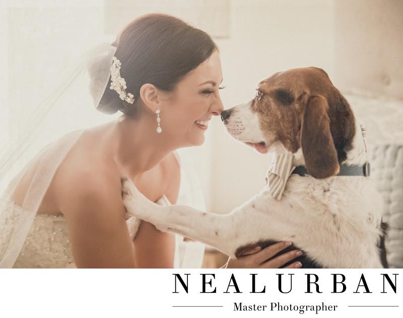 buffalo bride and dog pose salvatore's wedding reception
