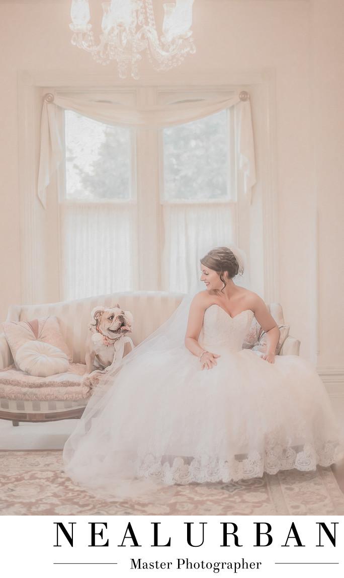 Washington dc wedding photographers bride with bulldog