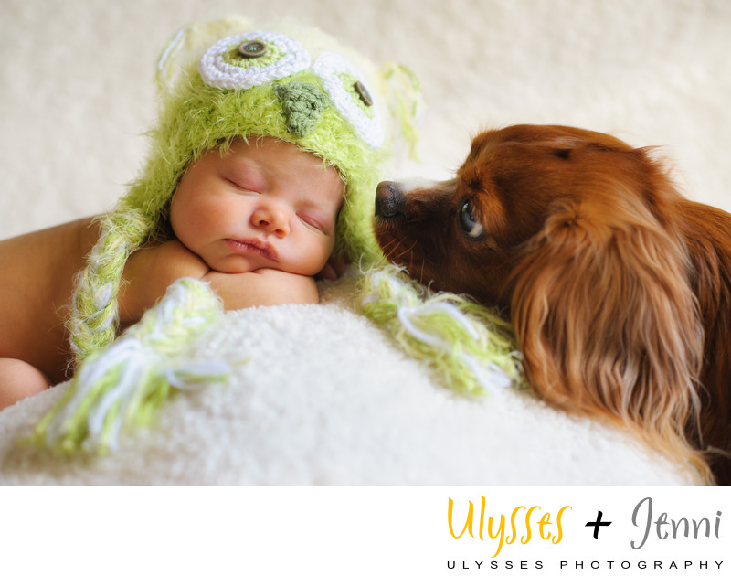 BEST NEWBORN PHOTOS WITH DOGS IN THE HUDSON VALLEY - ULYSSES PHOTOGRAPHY