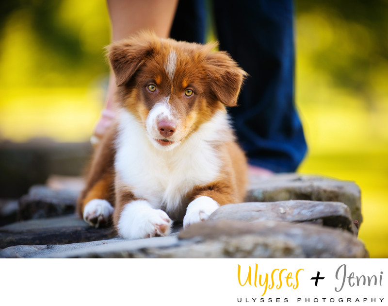 CUTEST PUPPY PET PHOTOGRAPHY