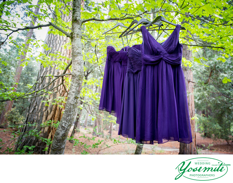 Purple Bridesmaid Dresses Hanging In Trees Yosemite
