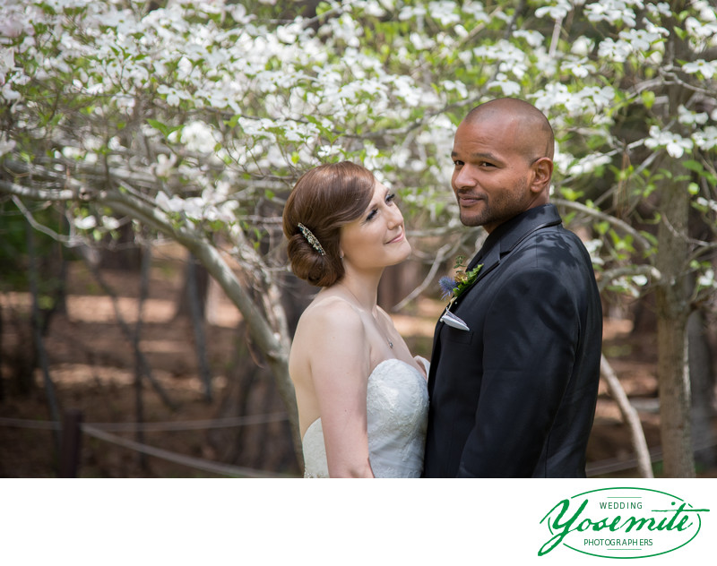Bride Admires Groom Under Dogwood Trees