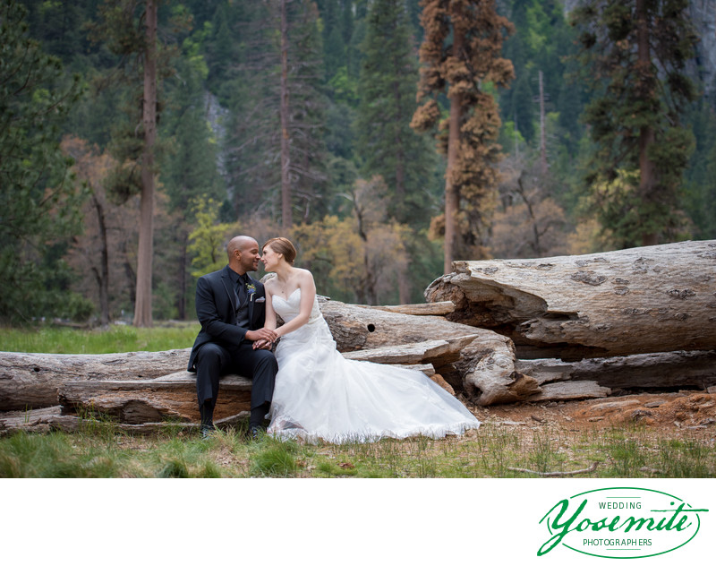 Bride And Groom Kissing On Fallen Log in Yosemite
