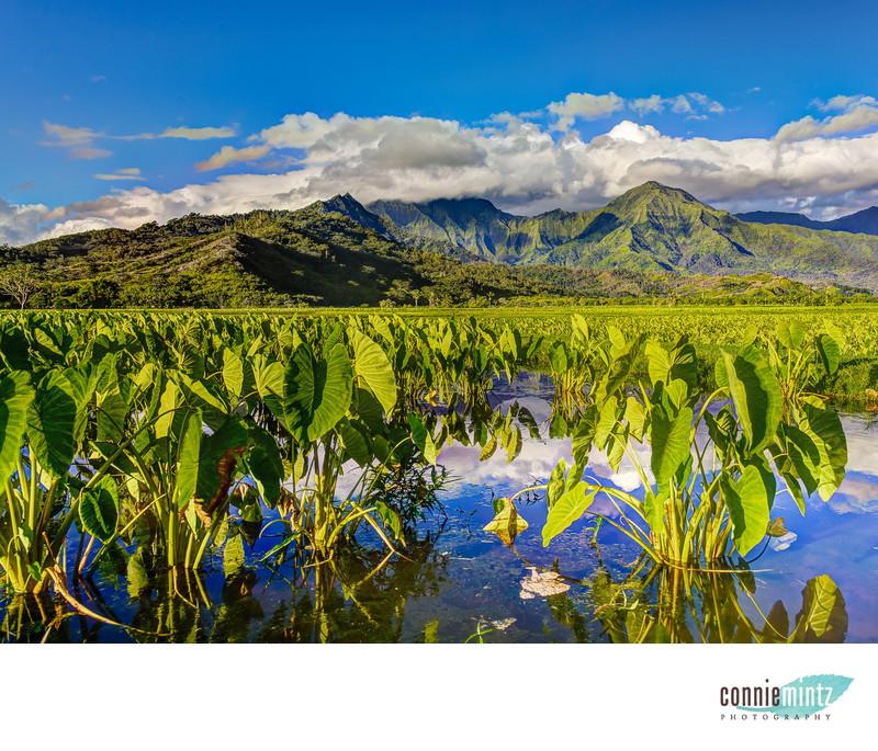 Hawaiian Fields