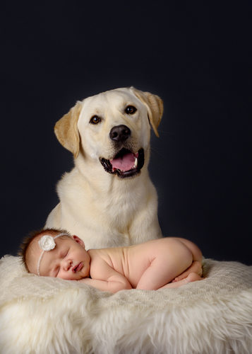 Newborn posed with white lab