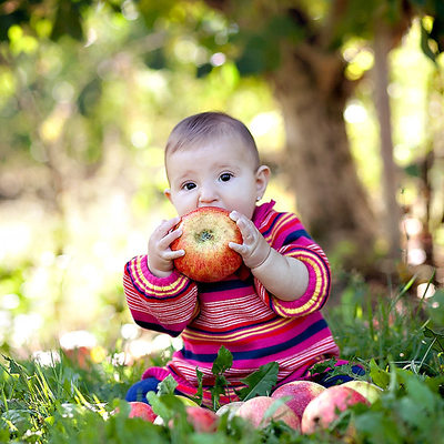 Fall Apple Orchard Photos Boston