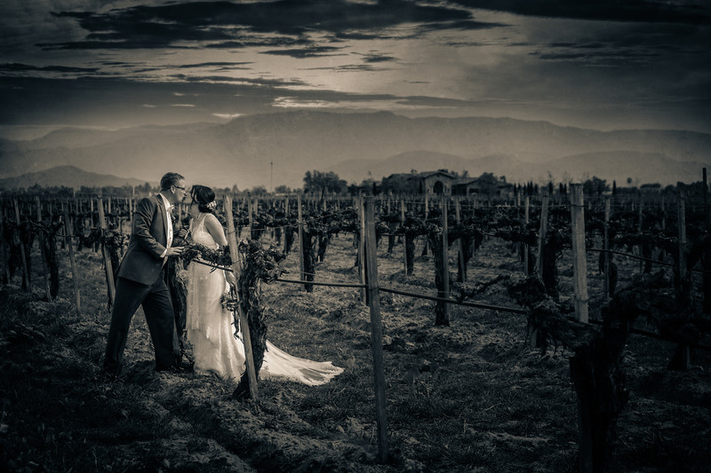 Ponte Winery Photographer