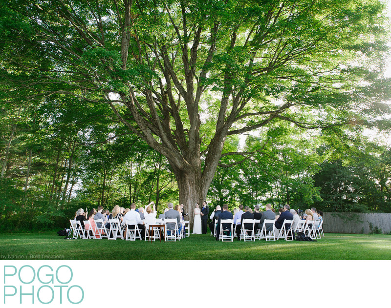 The Pogo Wedding: Ceremony beneath oldest VT maple tree