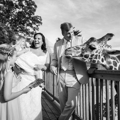 Feeding Giraffes at Elmwood Park Zoo Wedding