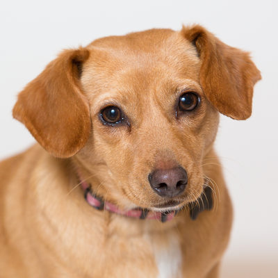 Professional Pet Portraits in Malvern- SPCA Rescue Mutt