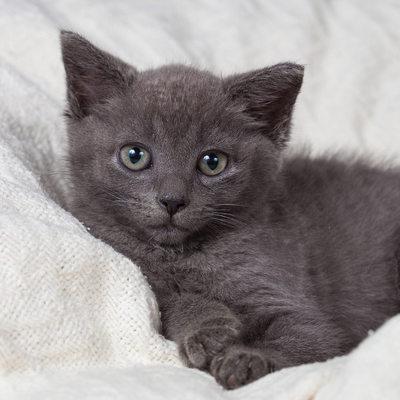 West Chester Pet Photographer - Kitten Photos
