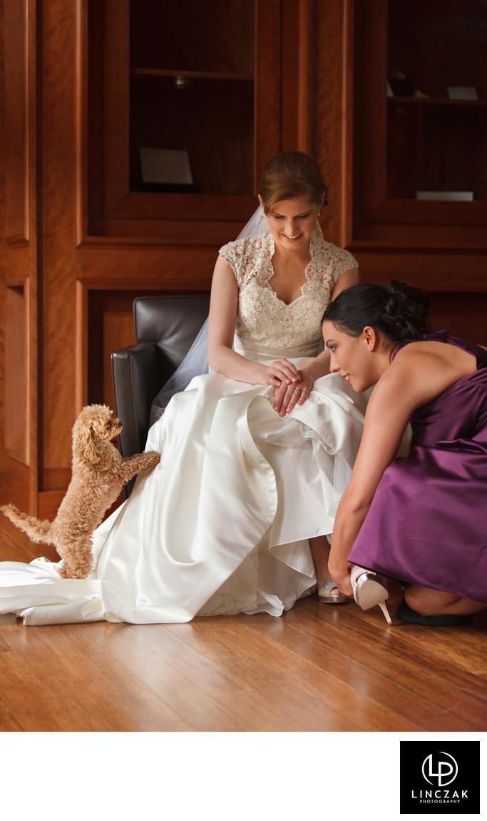 cute dog wedding photo