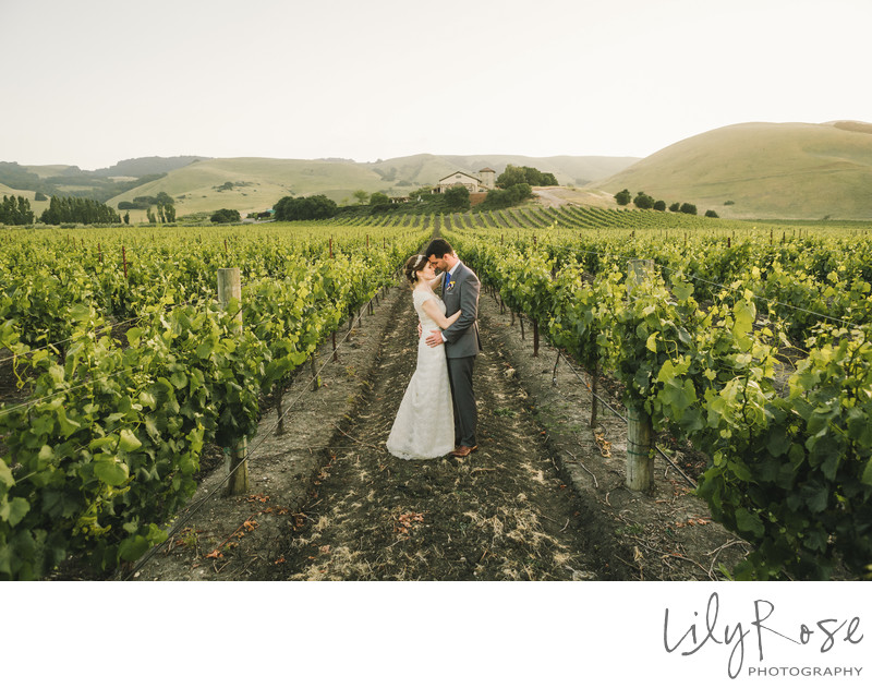 Top Wedding Photographers Gloria Ferrer Winery