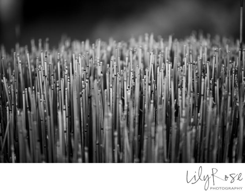 Mendocino Wedding Photography Bamboo
