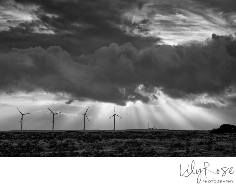 Lily Rose Photography Hawaii Windmill and Sunshine