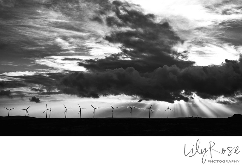 Lily Rose Photography Hawaii Windmill