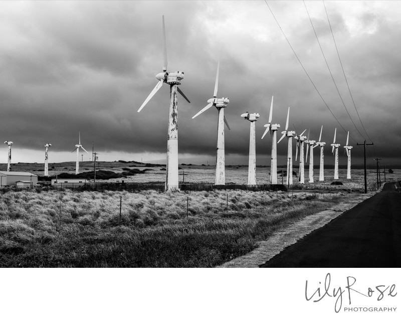 Lily Rose Photography Hawaii Windmills