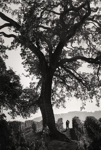 Sonoma Wedding Photographer BR Cohn