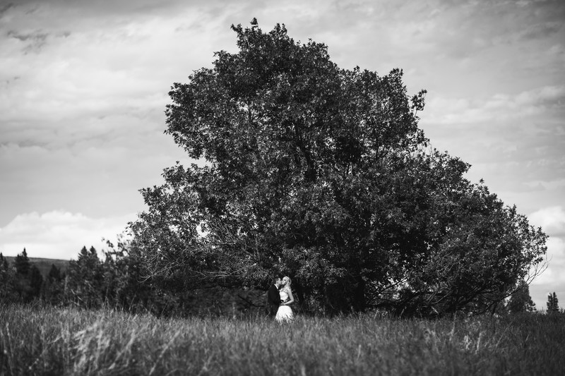 Calgary Wedding Photographers Tree With Bride & Groom