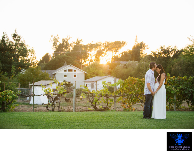 Napa Valley Maternity Photography