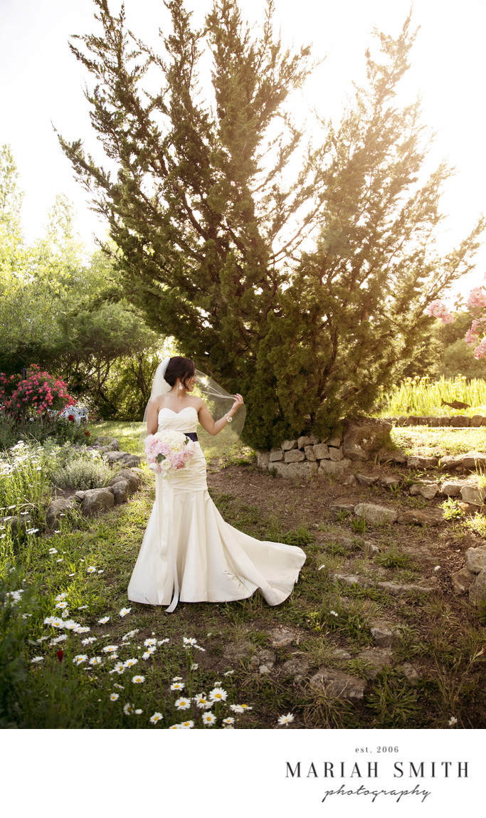 Best Wedding Photography in Calistoga