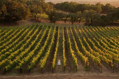 two brides vineyard wedding photography