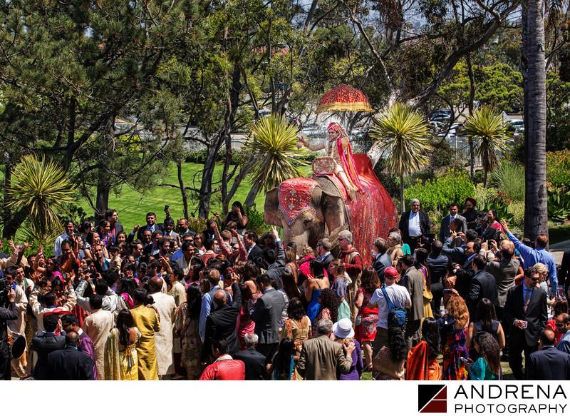 Indian Wedding Photographer Ritz Carlton Laguna Niguel Elephant