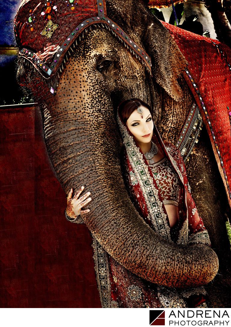 Bride With Elephant Dina Douglass Andrena Photography