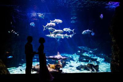 Virginia Aquarium Wedding - Shark Tank love