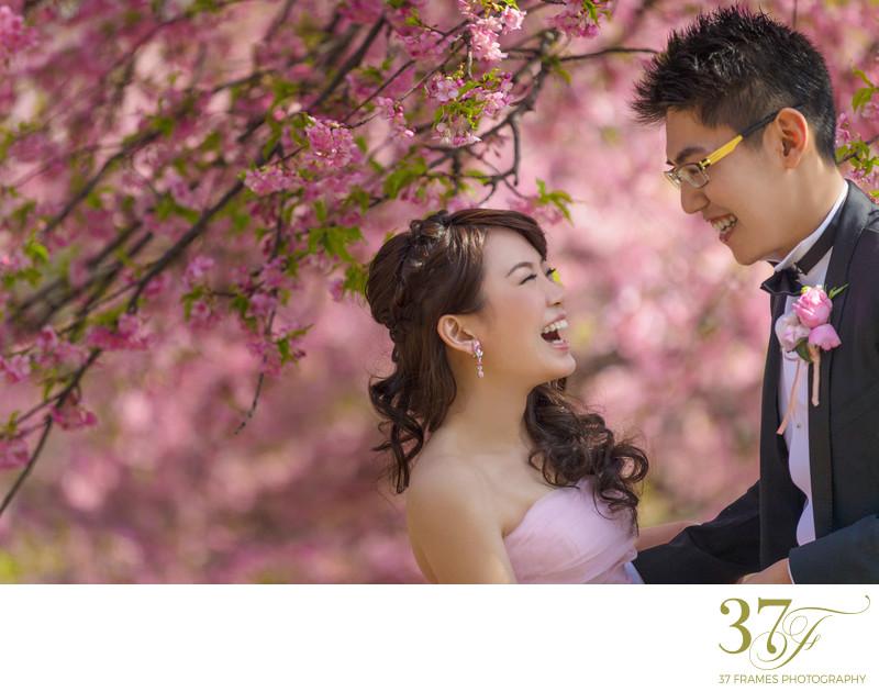 Brisbane blossoms Pre-Wedding Photo
