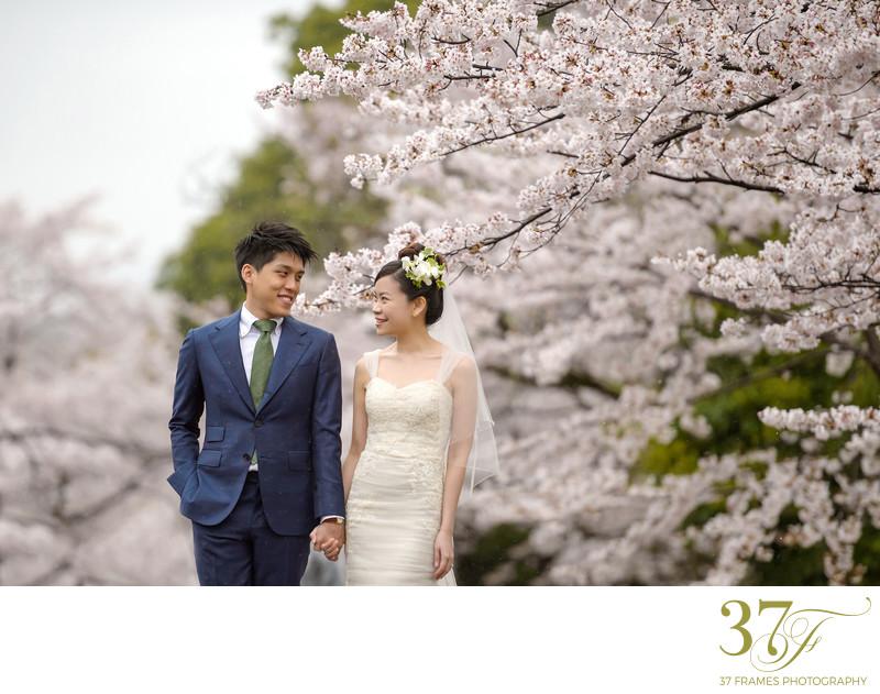 Destination Pre-Wedding Blossoms in Brisbane
