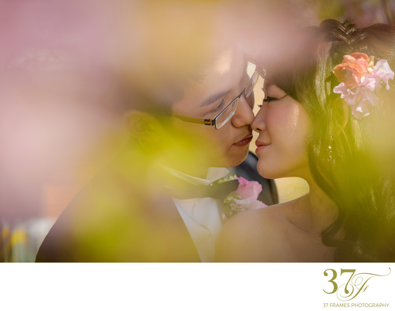 Blossom Pre-Wedding Photography Brisbane