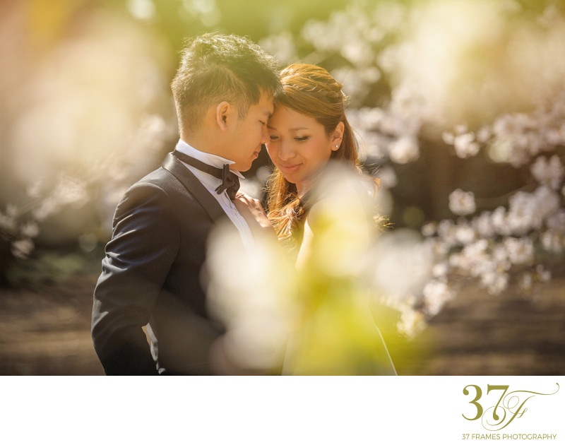 Best Brisbane Pre-Wedding Photographers