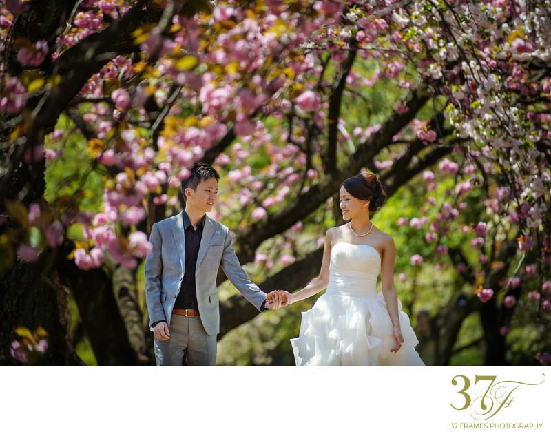 Pre-wedding photographers in Brisbane